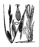 Photographie n°3860 du taxon