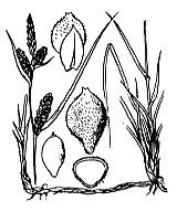 Photographie n°3867 du taxon