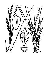 Photographie n°3870 du taxon
