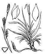 Photographie n°3890 du taxon