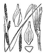 Photographie n°3900 du taxon