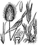 Photographie n°4021 du taxon