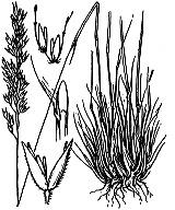Photographie n°4044 du taxon