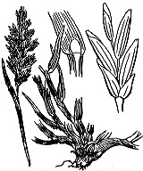 Photographie n°4094 du taxon