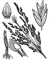 Photographie n°4109 du taxon