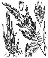 Photographie n°4163 du taxon