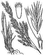 Photographie n°4168 du taxon
