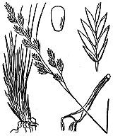Photographie n°4182 du taxon
