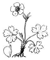 Photographie n°42 du taxon