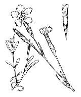 Photographie n°500 du taxon