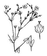 Photographie n°600 du taxon