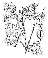 Photographie n°634 du taxon