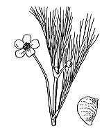 Photographie n°7 du taxon