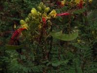 Photographie n°jlt001642 du taxon