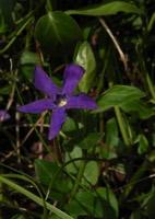 Photographie n°jlt006495 du taxon