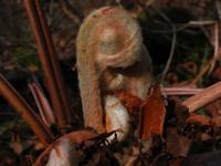 Photographie n°jlt006639 du taxon