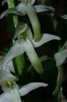 Photographie n°jlt010187 du taxon