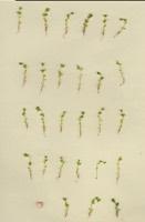 Photographie n°jlt010250 du taxon