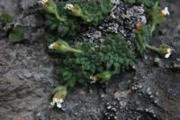 Photographie n°jlt010545 du taxon