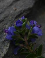 Photographie n°jlt010845 du taxon