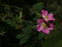 Photographie n°jlt011141 du taxon