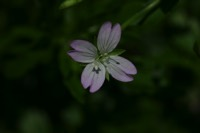 Photographie n°jlt011382 du taxon