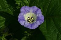 Photographie n°jlt012795 du taxon