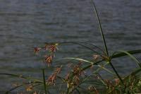 Photographie n°jlt013022 du taxon