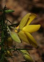 Photographie n°jlt014209 du taxon