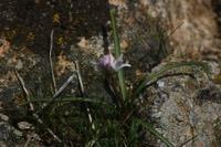 Photographie n°jlt015032 du taxon