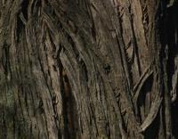 Photographie n°jlt015054 du taxon