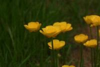 Photographie n°jlt015286 du taxon