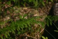 Photographie n°jlt015742 du taxon