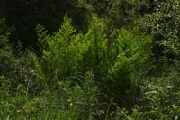 Photographie n°jlt015828 du taxon