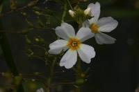 Photographie n°jlt015918 du taxon