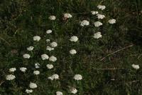 Photographie n°jlt016089 du taxon