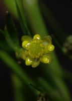 Photographie n°jlt016128 du taxon