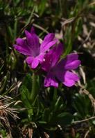 Photographie n°jlt016254 du taxon