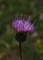 Photographie n°jlt016752 du taxon