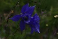 Photographie n°jlt017219 du taxon