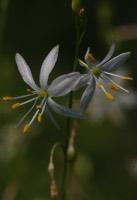 Photographie n°jlt017449 du taxon