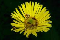 Photographie n°jlt018340 du taxon