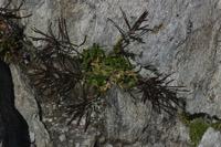 Photographie n°jlt018906 du taxon
