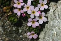 Photographie n°jlt018915 du taxon