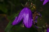 Photographie n°jlt019280 du taxon