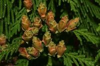 Photographie n°jlt019379 du taxon