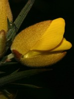 Photographie n°jlt019703 du taxon