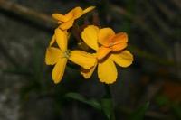 Photographie n°jlt020978 du taxon