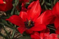 Photographie n°jlt021269 du taxon