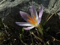 Photographie n°jlt021428 du taxon